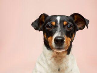 Een nieuwe hondenriem koop je bij Hondenmagazijn